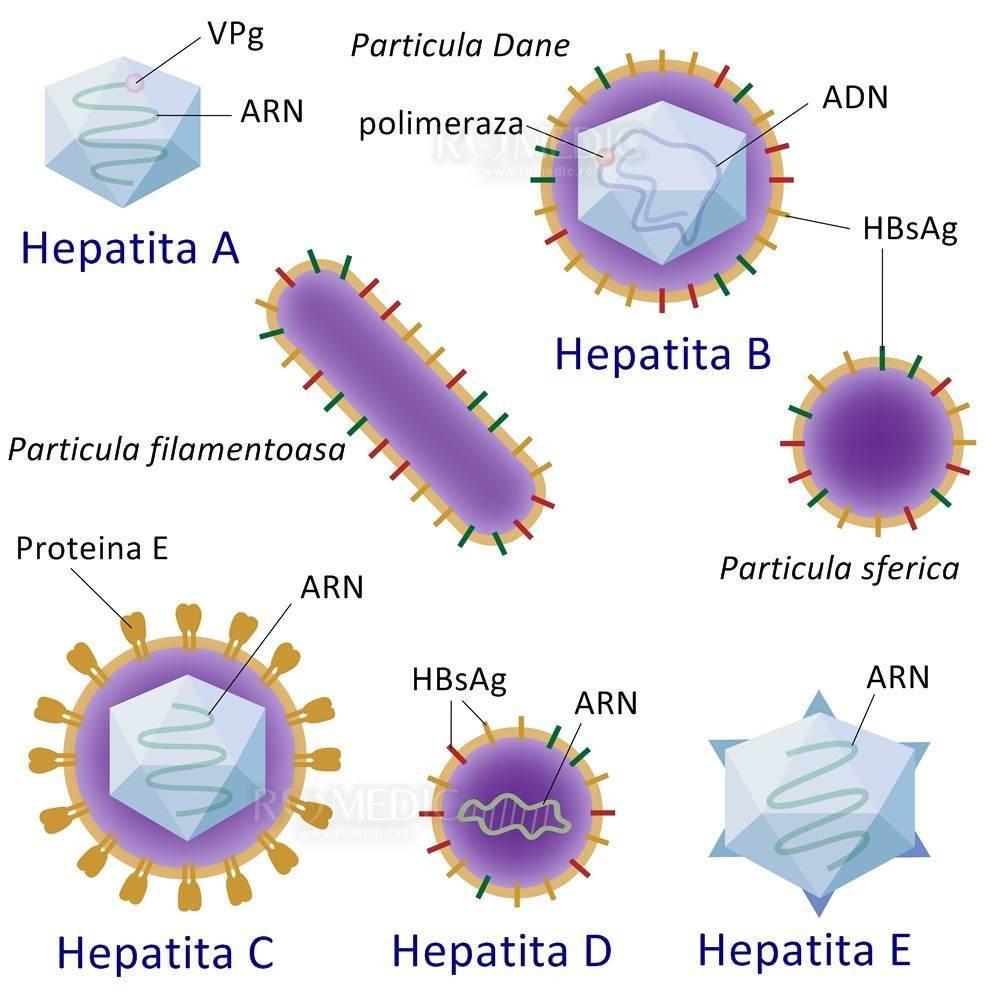 hepatita virala cu dureri articulare dureri de mâncărime articulară musculară